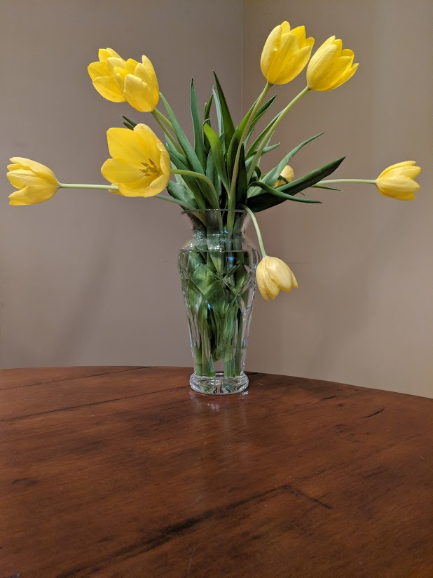 Yellow Tulips by Rosanna Anderson