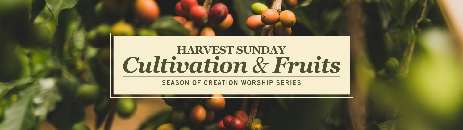 Harvest Sunday: Cultivation and Fruits worship series text over image of green leaves with berries