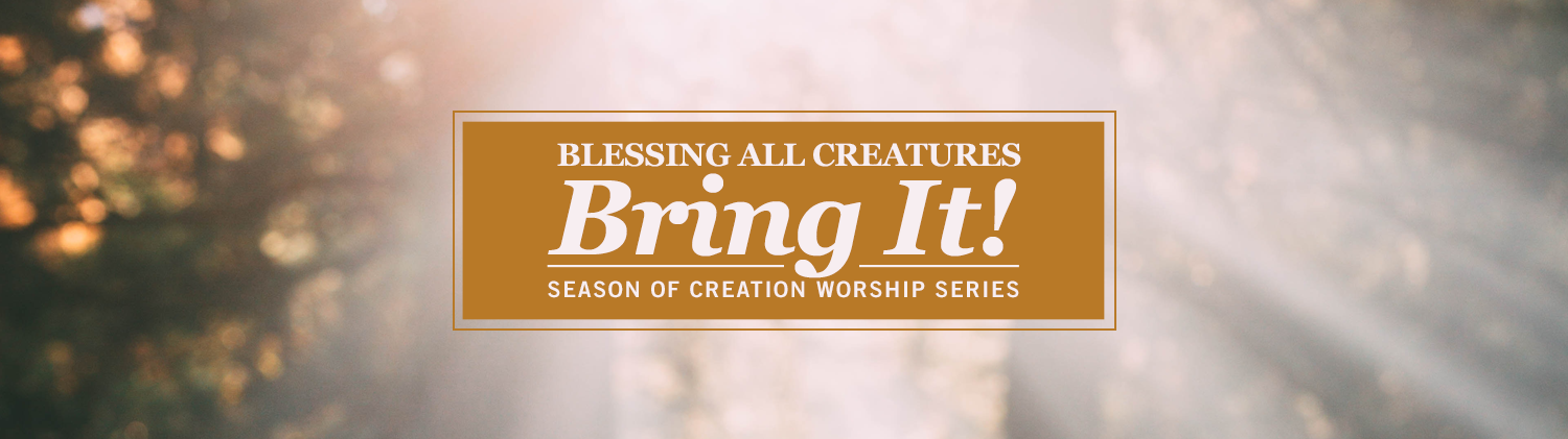 Blessings All Creatures: Bring It! worship series text over heavily blurred but bright nature image